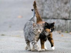 Zwei-Katzen-Streuner
