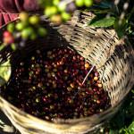 Café: Exigen estándar laboral del primer mundo con un precio de venta del tercer mundo!