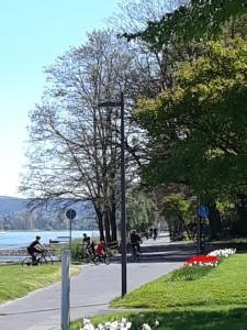 Fahrradfahren am Rhein